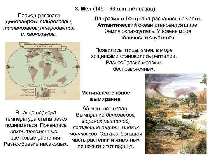 3. Мел (145 – 66 млн. лет назад)