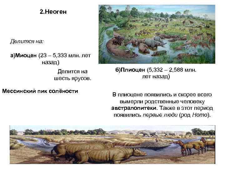 2. Неоген Делится на: а)Миоцен (23 – 5, 333 млн. лет