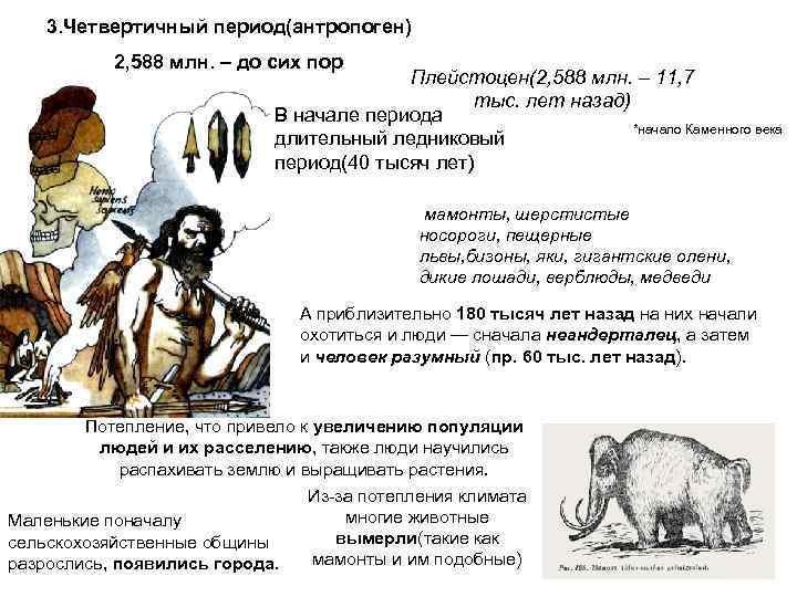 3. Четвертичный период(антропоген)  2, 588 млн. – до сих пор