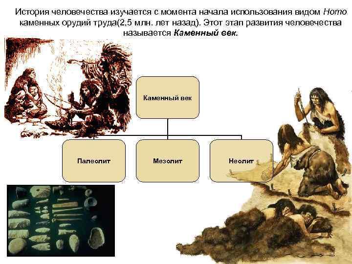 История человечества изучается с момента начала использования видом Homo  каменных орудий труда(2, 5