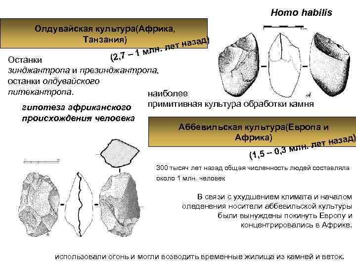 Homo habilis  Олдувайская культура(Африка,