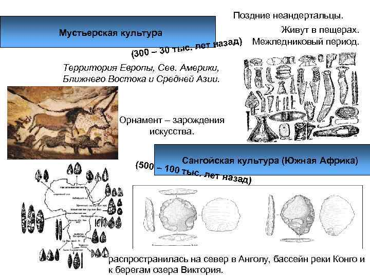 Поздние неандертальцы. Мустьерская культура     Живут в