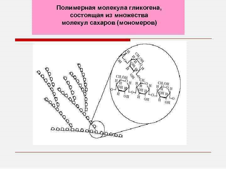 Полимерная молекула гликогена, состоящая из множества молекул сахаров (мономеров)