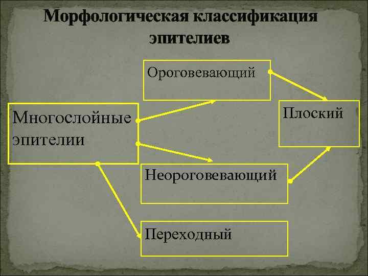 Морфологическая классификация    эпителиев   Ороговевающий  Многослойные