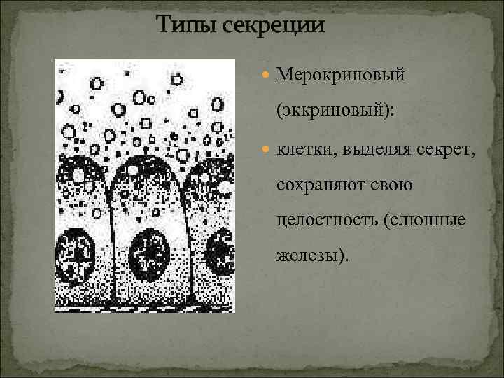 Типы секреции  Мерокриновый  (эккриновый):   клетки, выделяя секрет,   сохраняют
