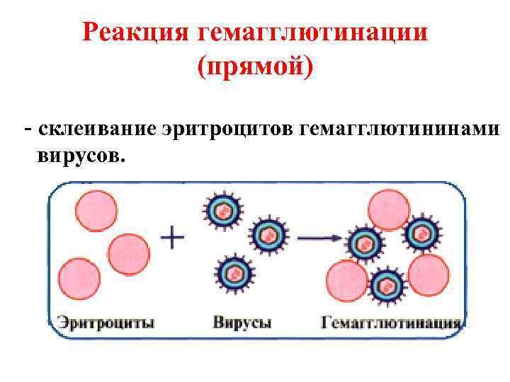 Реакция гемагглютинации   (прямой) - склеивание эритроцитов гемагглютининами  вирусов.