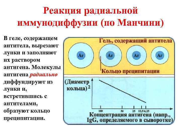Реакция радиальной иммунодиффузии (по Манчини) В геле, содержащем антитела, вырезают лунки и