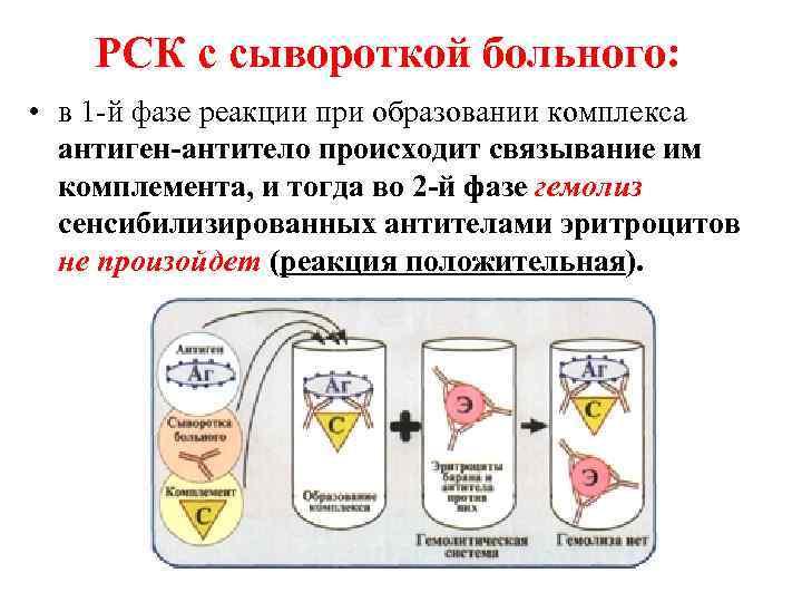 РСК с сывороткой больного:  • в 1 -й фазе реакции при