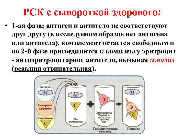 РСК с сывороткой здорового:  • 1 -ая фаза: антиген и антитело не