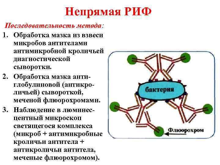 Непрямая РИФ Последовательность метода: 1. Обработка мазка из взвеси  микробов
