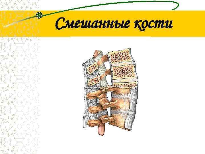 Смешанные кости