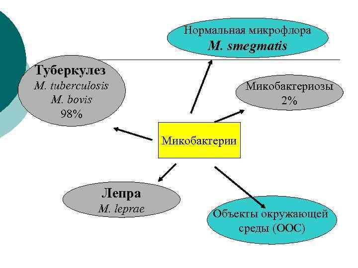 Нормальная микрофлора      M.