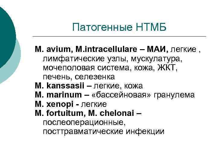 Патогенные НТМБ M. avium, M. intracellulare – МАИ, легкие ,