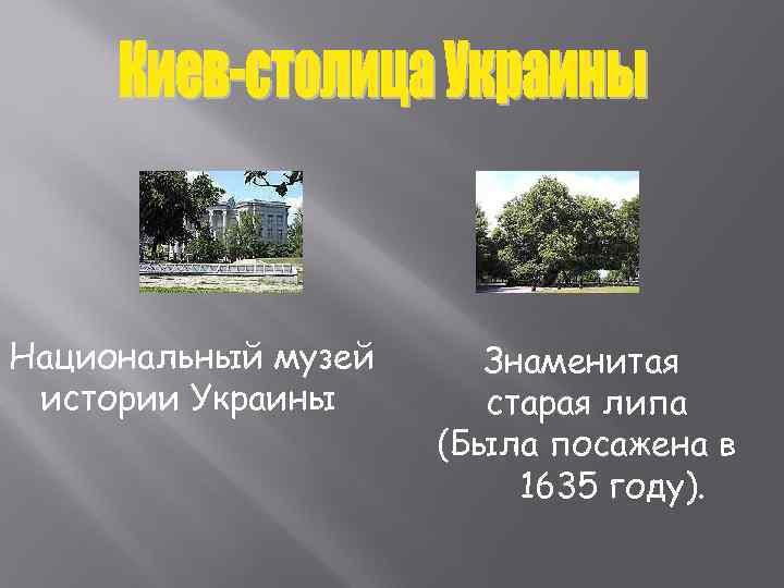 Национальный музей Знаменитая истории Украины  старая липа     (Была посажена