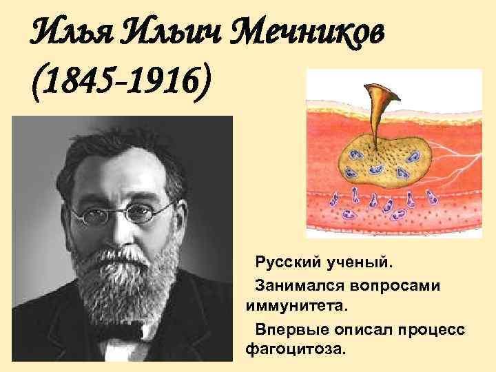 Илья Ильич Мечников (1845 -1916)    Русский ученый.   Занимался вопросами