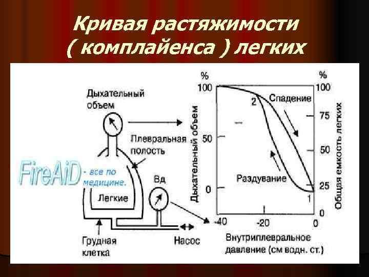Кривая растяжимости ( комплайенса ) легких