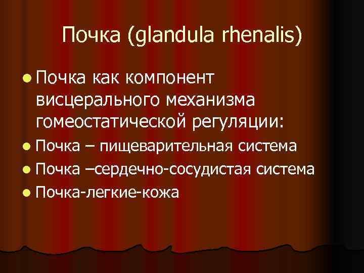 Почка (glandula rhenalis) l Почкакак компонент висцерального механизма гомеостатической регуляции: l Почка