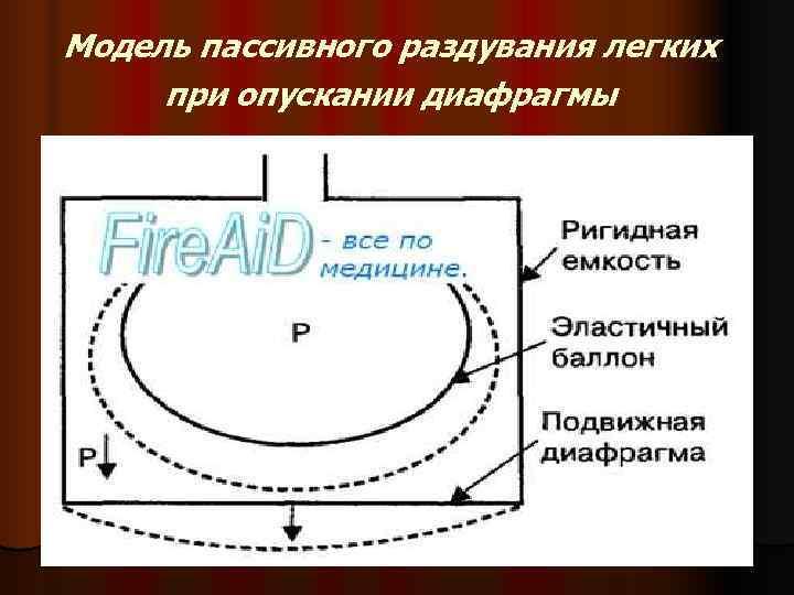 Модель пассивного раздувания легких при опускании диафрагмы