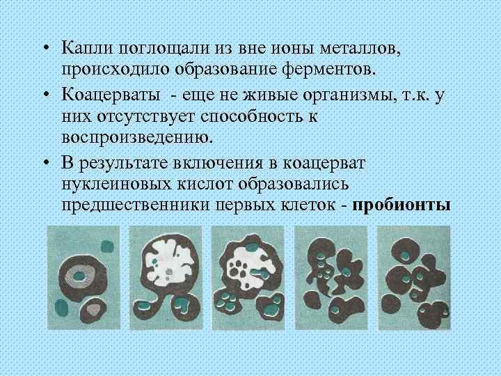 • Капли поглощали из вне ионы металлов,  происходило образование ферментов.  •