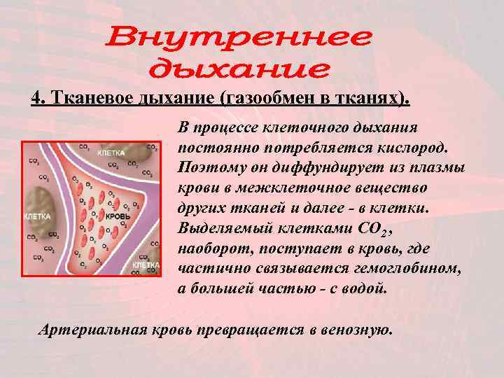4. Тканевое дыхание (газообмен в тканях).   В процессе клеточного дыхания
