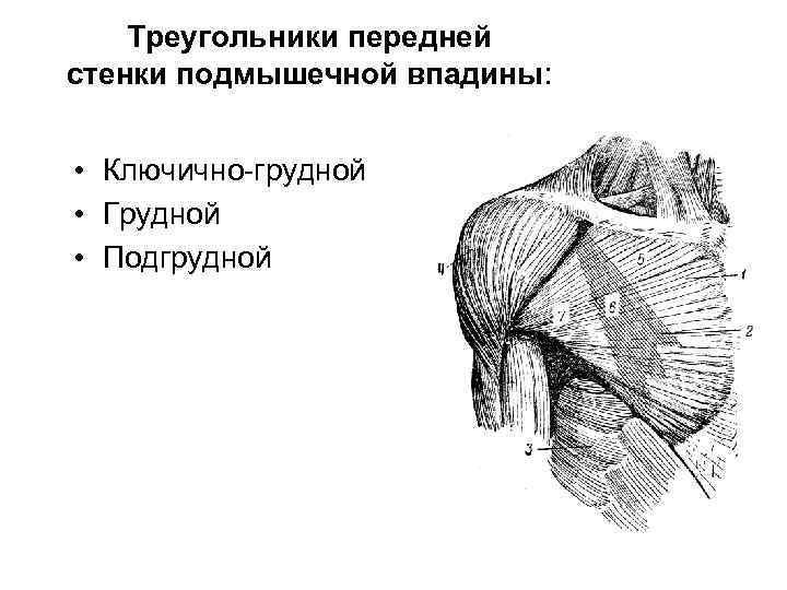 Треугольники передней стенки подмышечной впадины: • Ключично-грудной • Грудной • Подгрудной