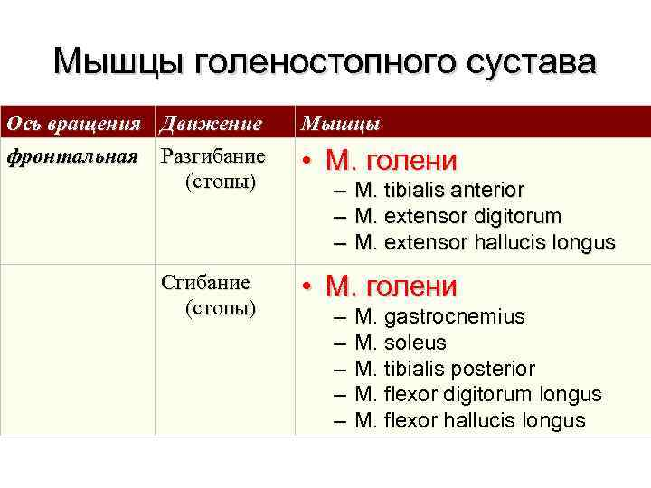 Мышцы голеностопного сустава Ось вращения  Движение Мышцы фронтальная  Разгибание