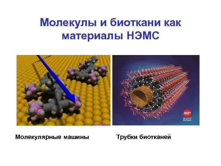 Молекулы и биоткани как  материалы НЭМС Молекулярные машины  Трубки биотканей