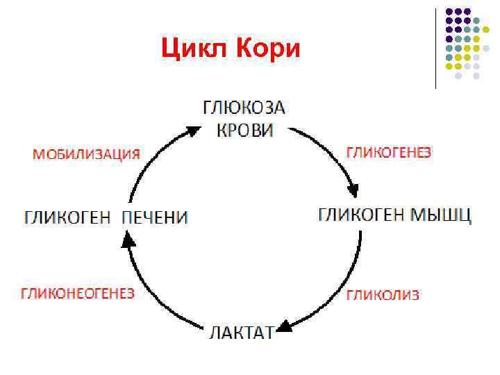Цикл Кори