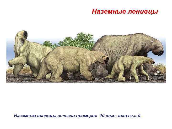 Наземные ленивцы исчезли примерно 10 тыс. лет