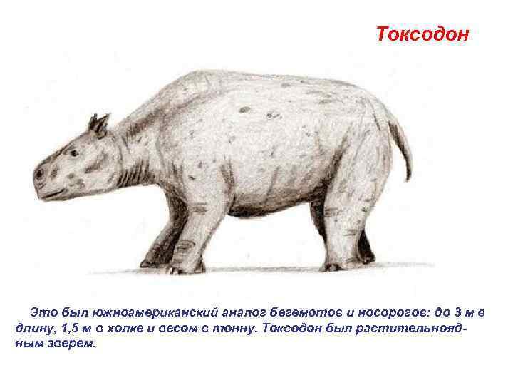 Токсодон   Это был южноамериканский аналог бегемотов и