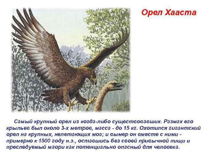 Орел Хааста  Самый крупный орел из когда-либо существовавших.