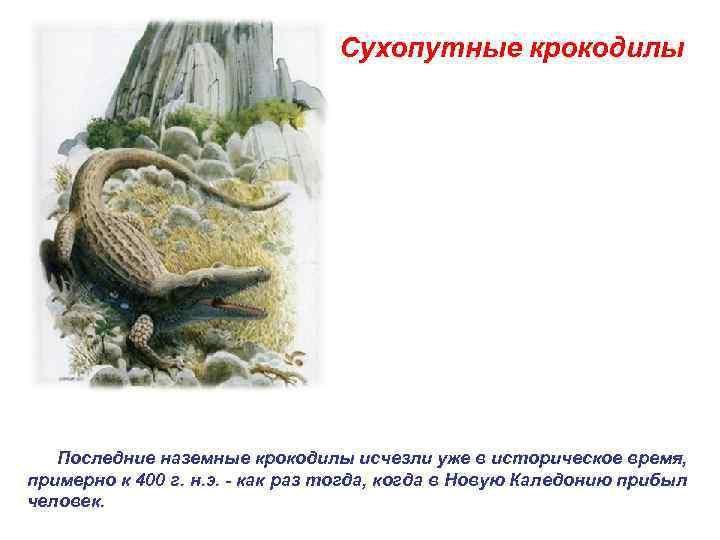 Сухопутные крокодилы   Последние наземные крокодилы