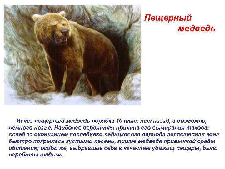Пещерный     медведь  Исчез пещерный медведь