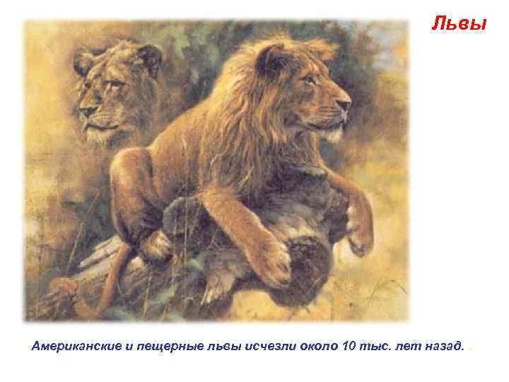 Львы Американские и пещерные львы исчезли около 10