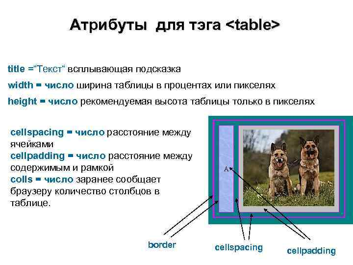 "Атрибуты для тэга <table> title =""Текст"" всплывающая подсказка width = число ширина"