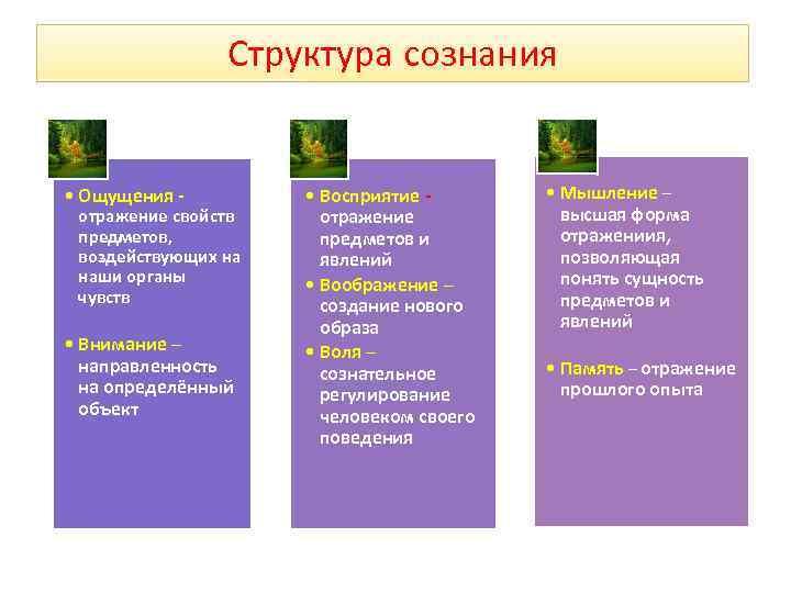 Структура сознания  • Ощущения -   • Восприятие