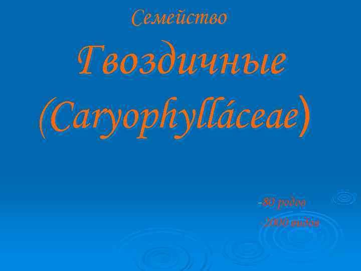 Семейство Гвоздичные (Caryophylláceae)       -80 родов