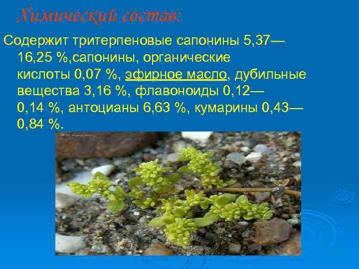 Химический состав: Содержит тритерпеновые сапонины 5, 37— 16, 25 %, сапонины, органические