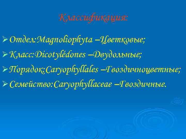 Классификация: Ø Отдел: Magnoliophyta –Цветковые; Ø Класс: Dicotylédones –Двудольные; Ø Порядок: