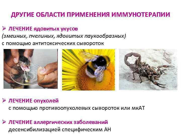 ДРУГИЕ ОБЛАСТИ ПРИМЕНЕНИЯ ИММУНОТЕРАПИИ Ø ЛЕЧЕНИЕ ядовитых укусов (змеиных, пчелиных, ядовитых паукообразных)