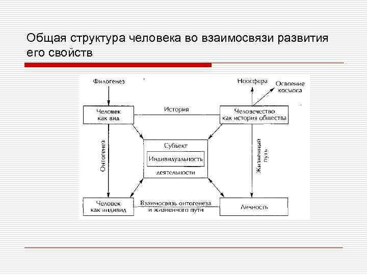 Общая структура человека во взаимосвязи развития его свойств