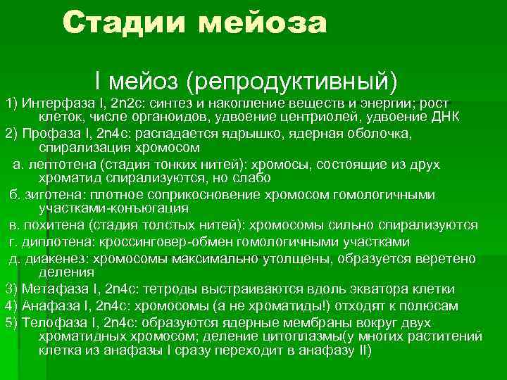 Стадии мейоза   I мейоз (репродуктивный) 1) Интерфаза I, 2 n