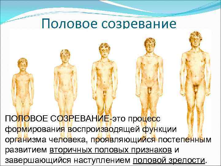 Половые органы всех возрастов фото