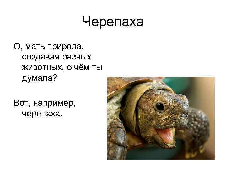 Черепаха О, мать природа,  создавая разных  животных, о чём