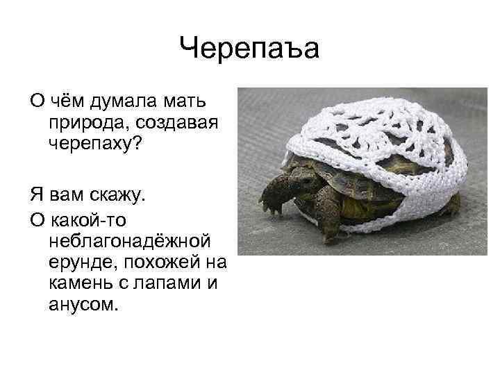 Черепаъа О чём думала мать  природа, создавая  черепаху?