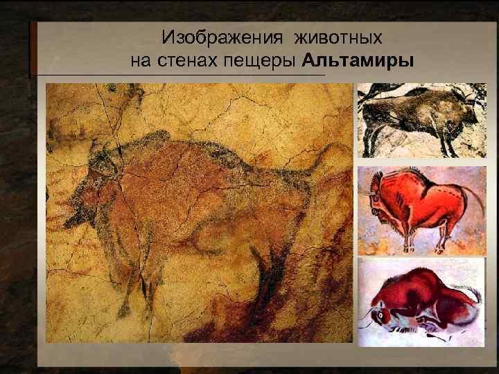Изображения животных на стенах пещеры Альтамиры