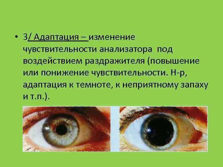 • 3/ Адаптация – изменение  чувствительности анализатора под  воздействием раздражителя (повышение