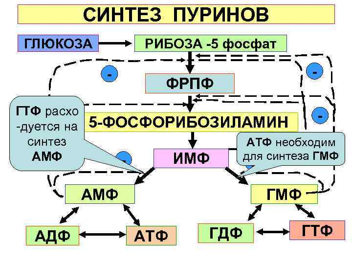 СИНТЕЗ ПУРИНОВ ГЛЮКОЗА    РИБОЗА -5 фосфат
