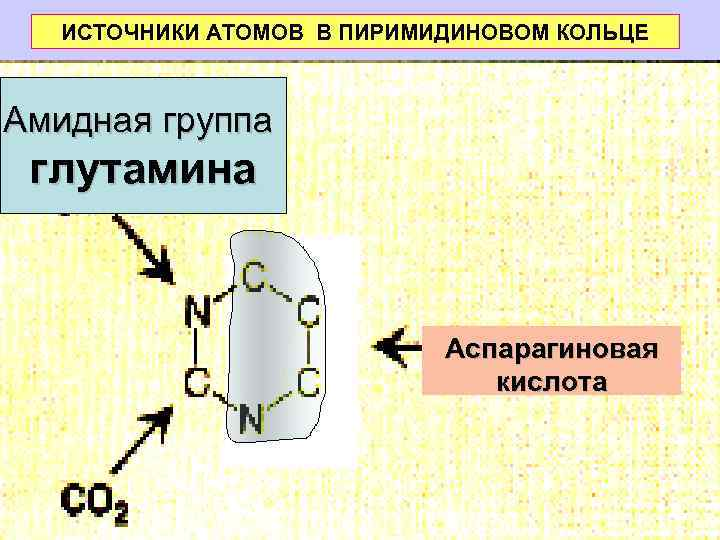 ИСТОЧНИКИ АТОМОВ В ПИРИМИДИНОВОМ КОЛЬЦЕ  Амидная группа глутамина