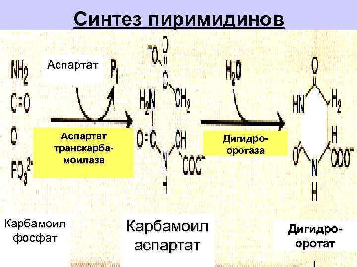 Синтез пиримидинов  Аспартат   Дигидро-  транскарба-